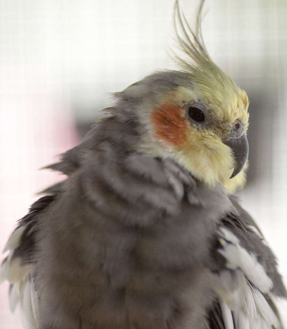 Animal Themes Animal Wildlife Animals In The Wild Bird Close-up Day Domestic Animals Focus On Foreground Indoors  Mammal Nature No People One Animal