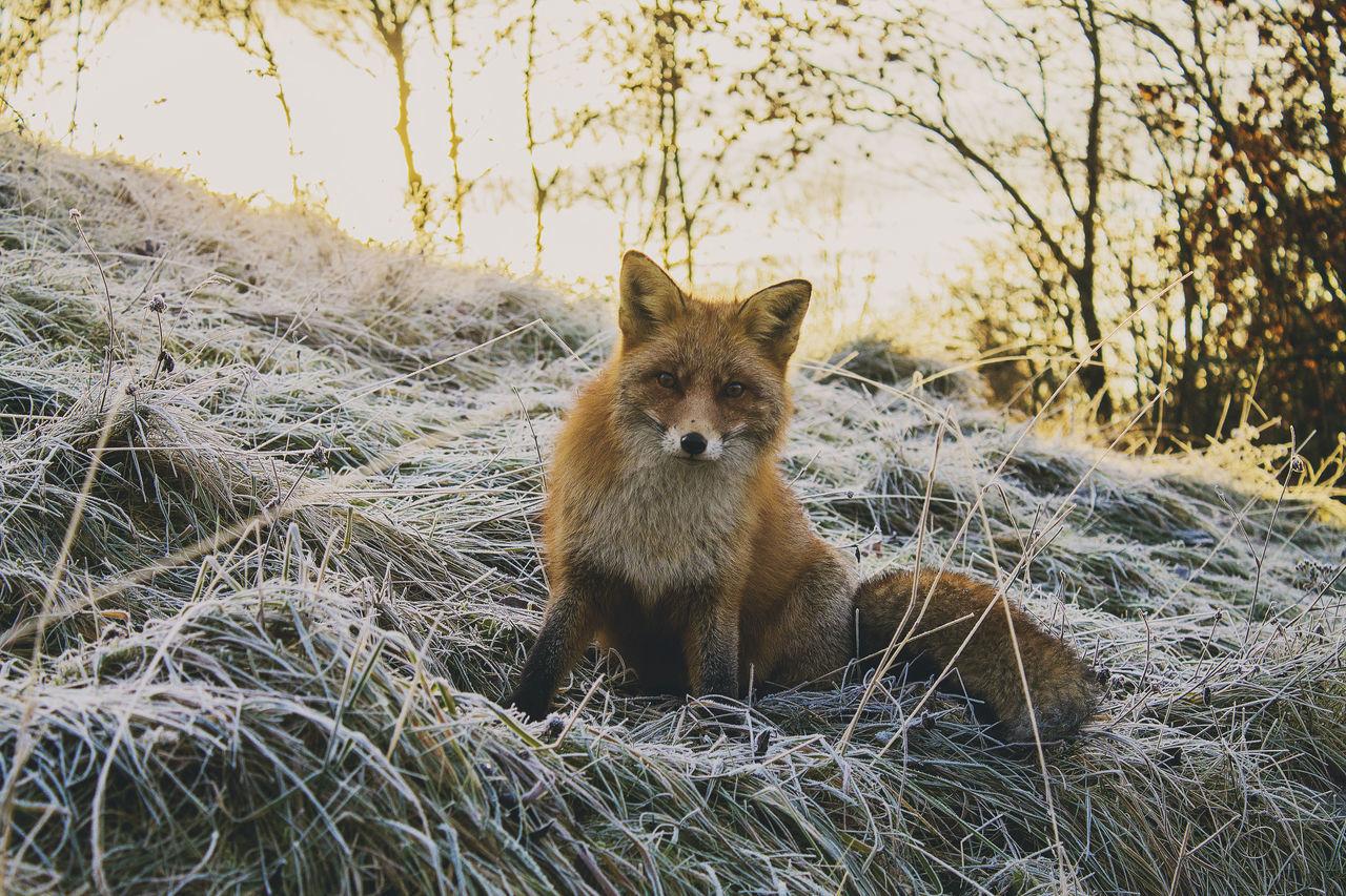 Beautiful stock photos of norway, animal themes, one animal, animals in the wild, wildlife