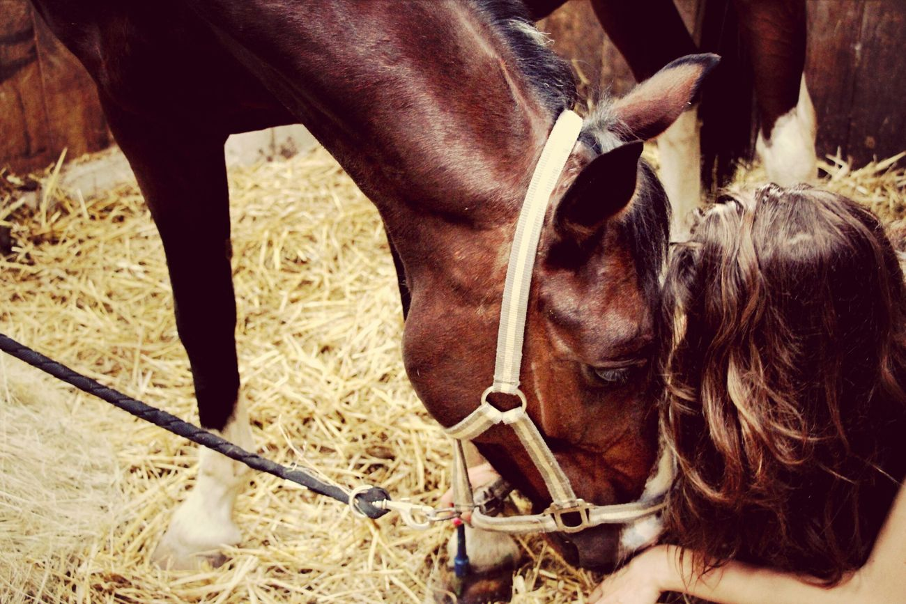 Enjoying Life Horse Beautiful Le Meilleur