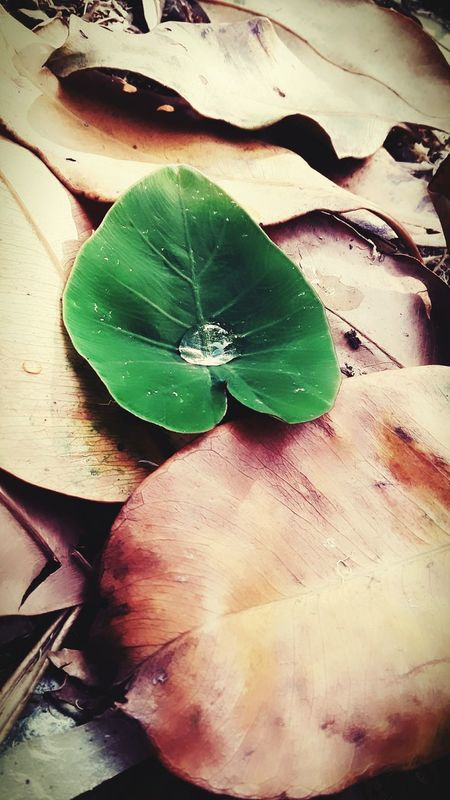 There Is Life Everywhere There Is Always Hope Nevergivingup No Matter What Just Believe In Yourself