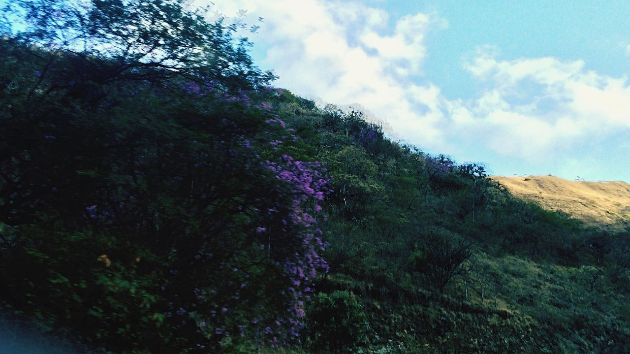 nature, beauty in nature, sky, scenics, tranquil scene, tree, tranquility, cloud - sky, day, landscape, no people, outdoors, growth, mountain, plant