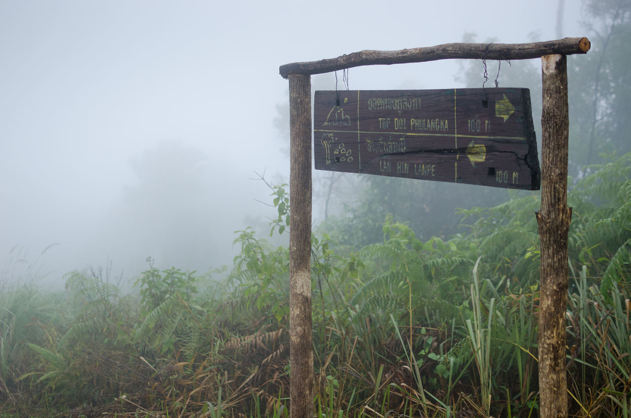 Day Label Mountain Nature No People Outdoors Phayao Road Thailand Trail Tree