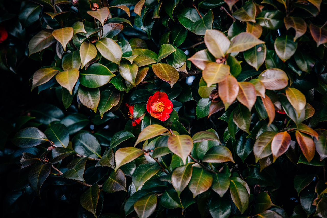 Beauty In Nature Close-up Day Flower Flower Head Fragility Freshness Green Color Growth Leaf Nature No People Outdoors Plant