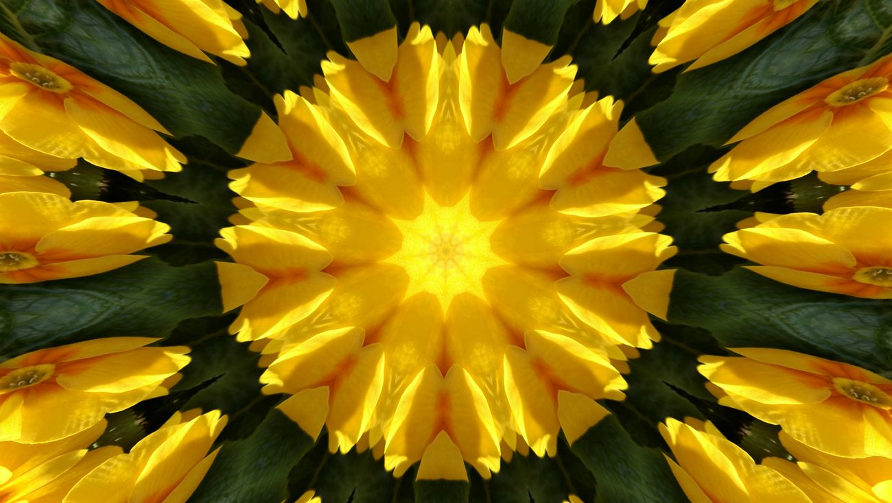 Flower Fragility Yellow Symmetry Nature Beauty In Nature Flower Head Backgrounds Petal Growth Full Frame Plant No People Close-up Outdoors Pollen Day Freshness Primrose Primroses Edited My Way