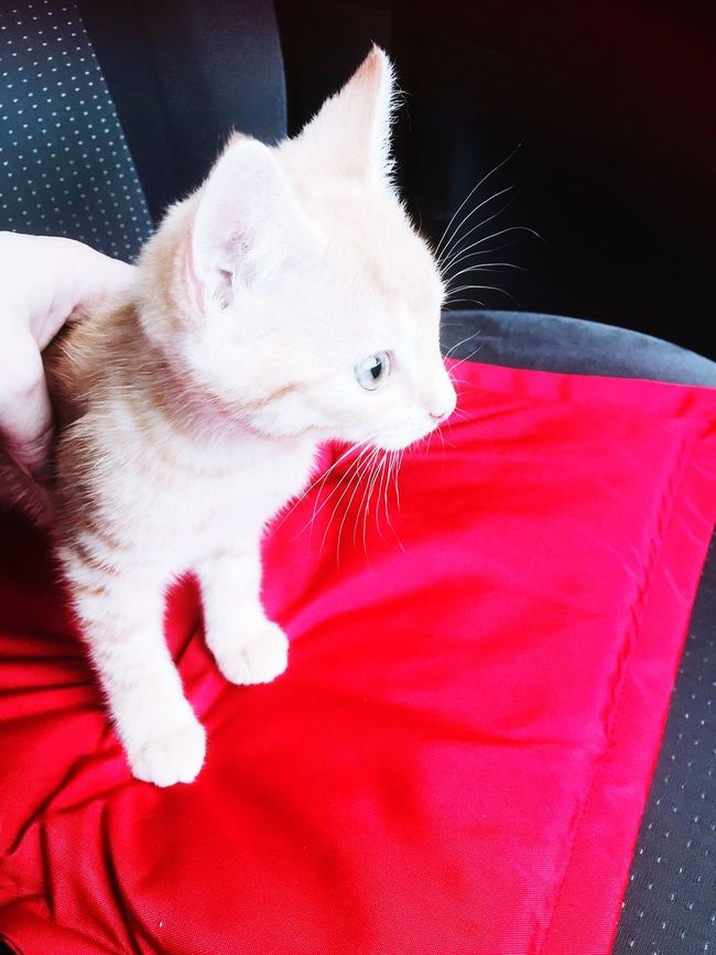 Bringing Garfield home for the first time to meet her new family
