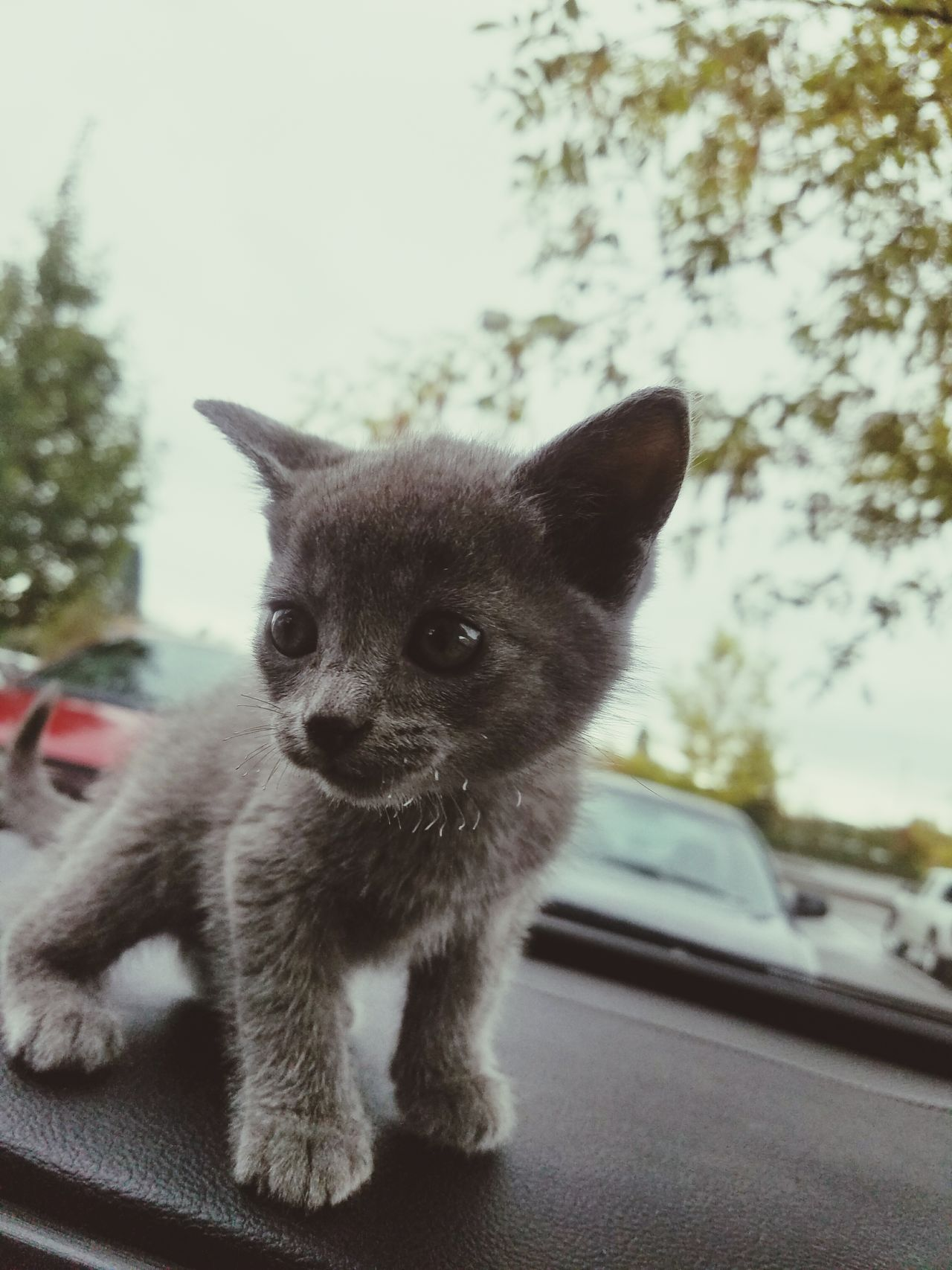 One Animal Animal Themes Looking At Camera Portrait Pets Mammal Domestic Animals No People Tree Dog Close-up Day Outdoors Love CarRides Kittens Animallovers Kittycat Looking At Camera Family❤