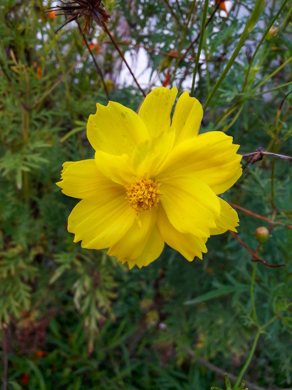 flower, yellow, petal, nature, beauty in nature, growth, fragility, plant, flower head, freshness, blooming, no people, outdoors, close-up, day