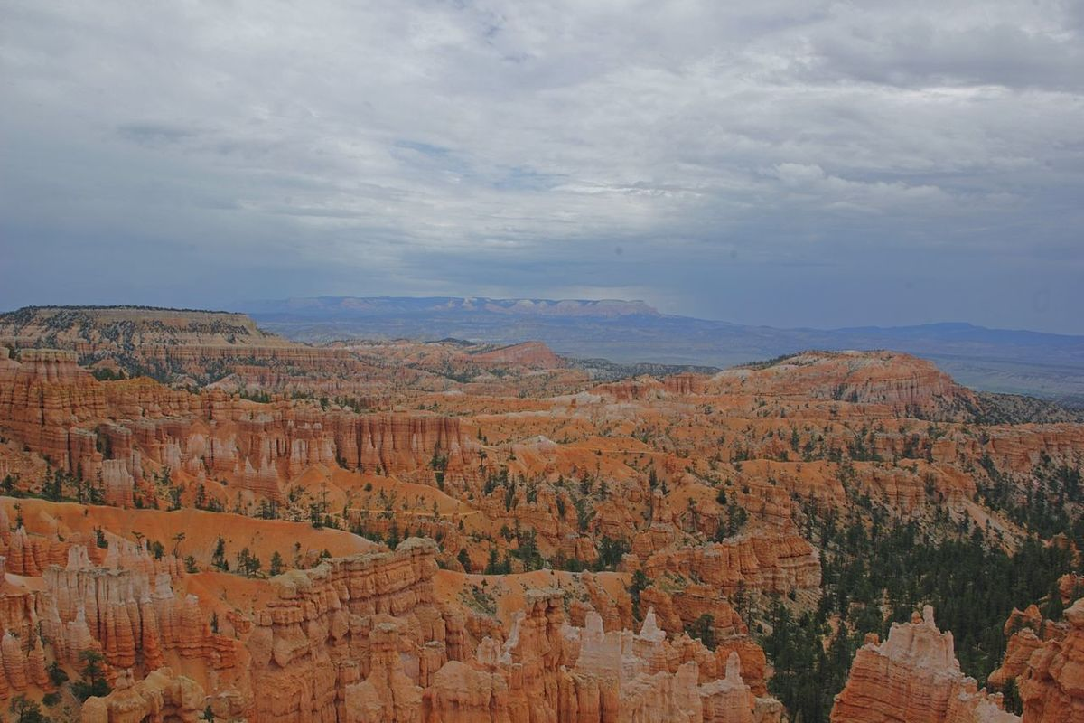 Scenics Nature Landscape No People Beauty In Nature Tree Outdoors Day Bryce Canyon National Park Canyon Rock