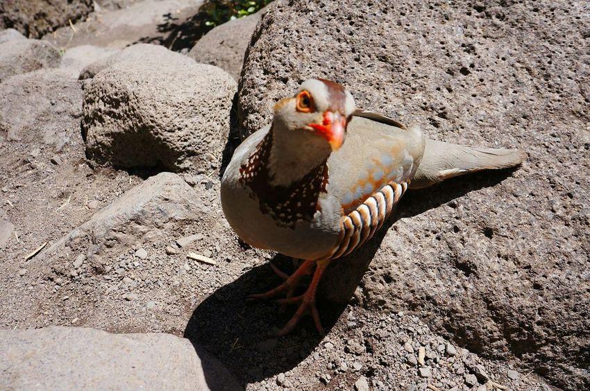 One Animal Bird Animal Themes Animal Wildlife Animals In The Wild Outdoors Portrait Day No People