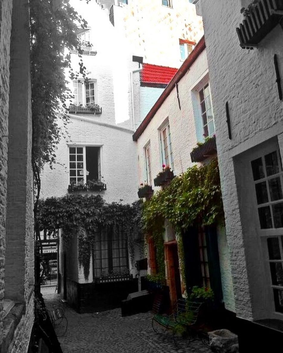 Architecture designs Alley Architecture B&W With Mix Colors Brick Wall Building Building Exterior Built Structure City Life Day Exterior Flowers House Old City Side Urban Wall Window