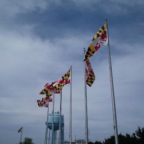 Maryland flags are flying for the Maryland Municipal League... Ocmd Oceancitycool