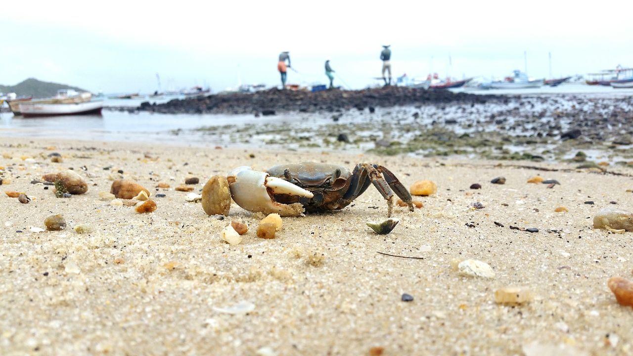 Brazil Beach Summer Crab Sea Life Buziosrj