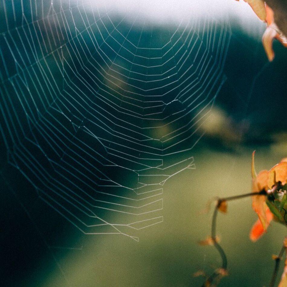 Maximum Closeness Spider Web Beauty In Nature