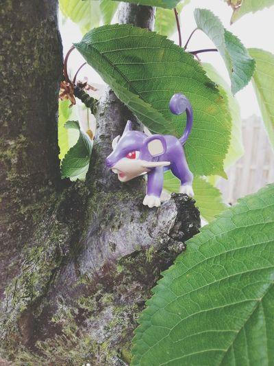 Rattata Pokémon