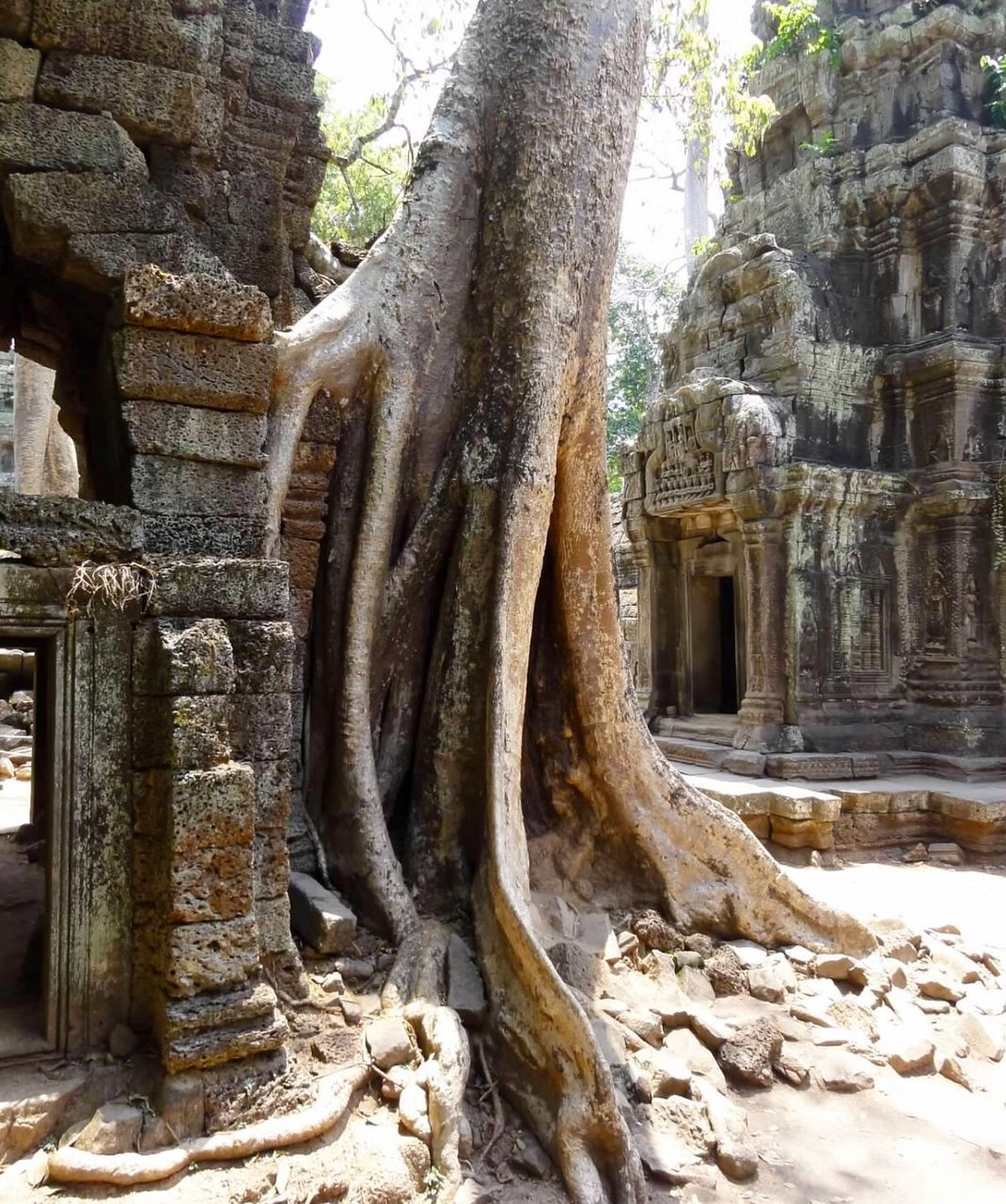 old ruin, ancient, tree trunk, ancient civilization, religion, day, history, tree, travel destinations, architectural column, spirituality, place of worship, nature, no people, root, built structure, outdoors, architecture, statue, sculpture