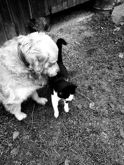 Taking Photos True Friendship ❤ Enjoying Life I Love My Dog