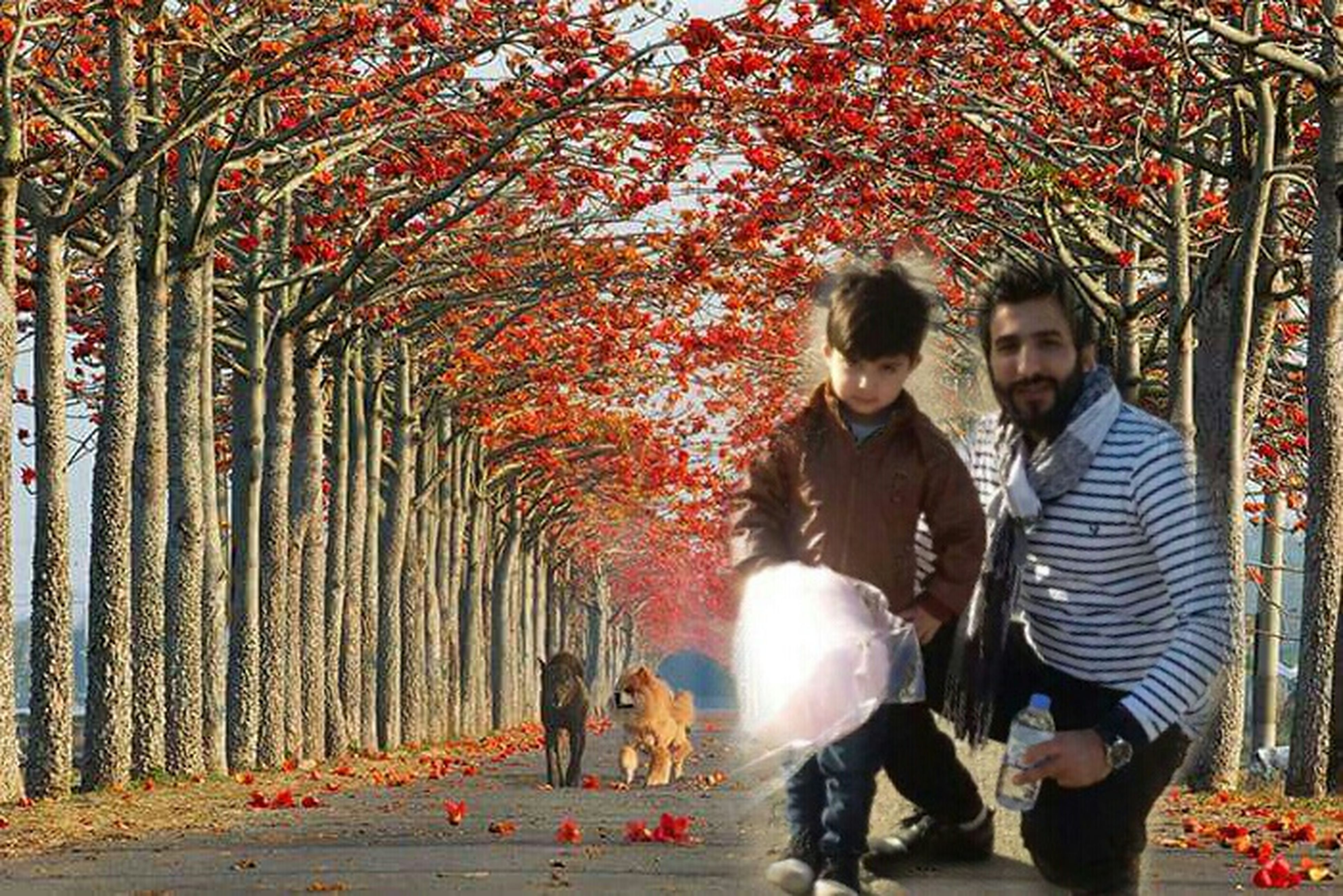 lifestyles, leisure activity, tree, casual clothing, togetherness, full length, park - man made space, girls, childhood, bonding, love, person, rear view, walking, men, standing, boys