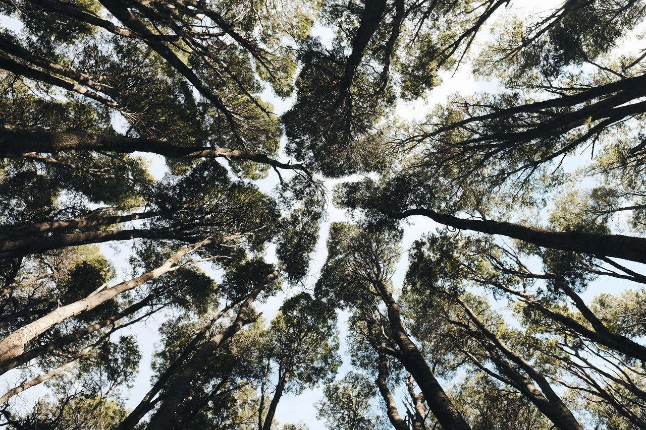 Perspective is everything Low Angle View Nature Tree Beauty In Nature No People Directly Below Forest Tranquility Day Scenics Outdoors Growth Tree Canopy  Sky Trees