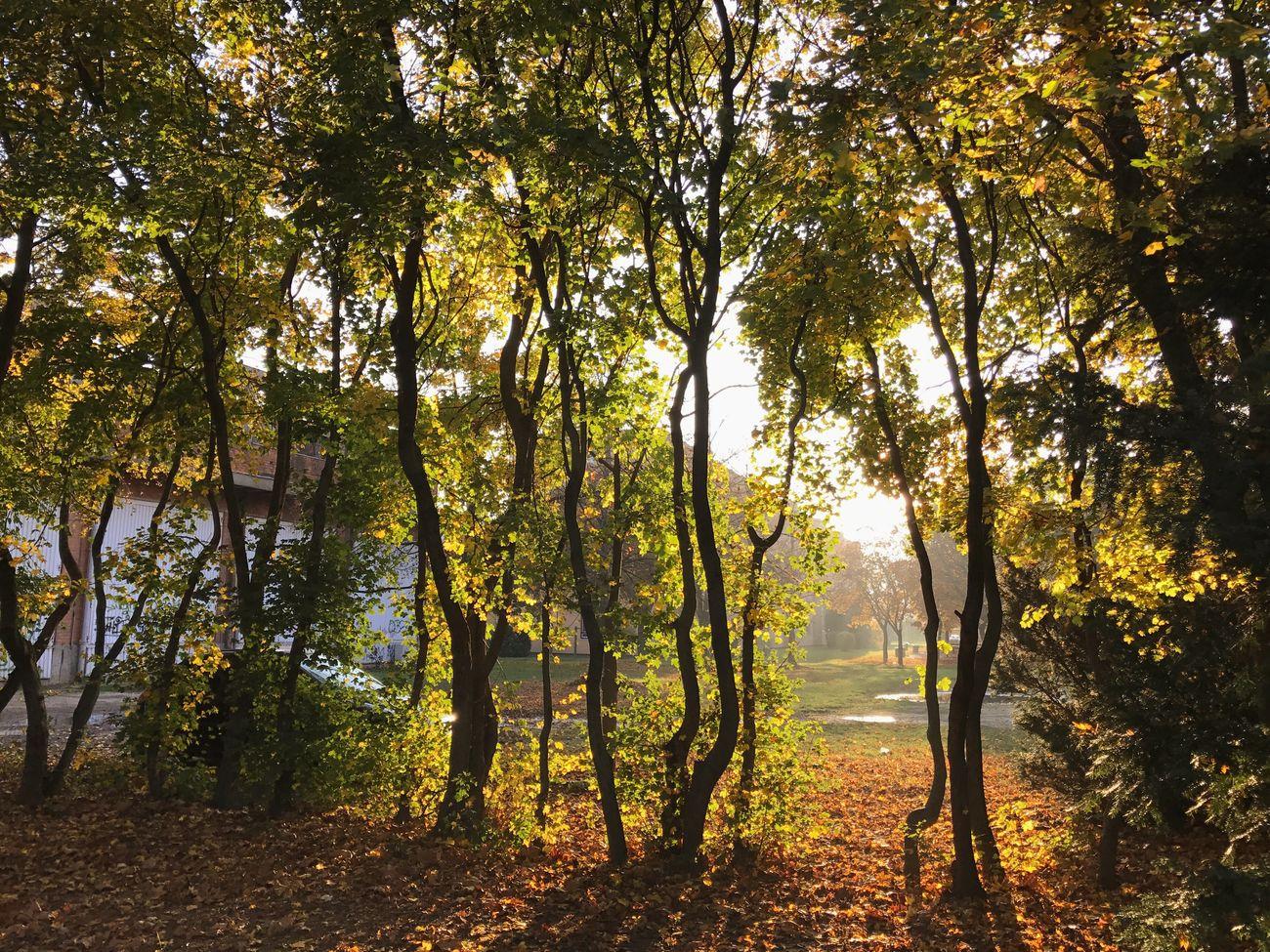 Autumn Autumn Colors Nature Tree Day Letters Hungary Szombathely