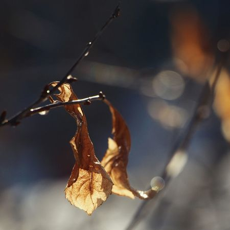 Leaves Foliage Beautiful Bokeh Bokehlicious Bokeh Lights Bokeh Photography Sunshine