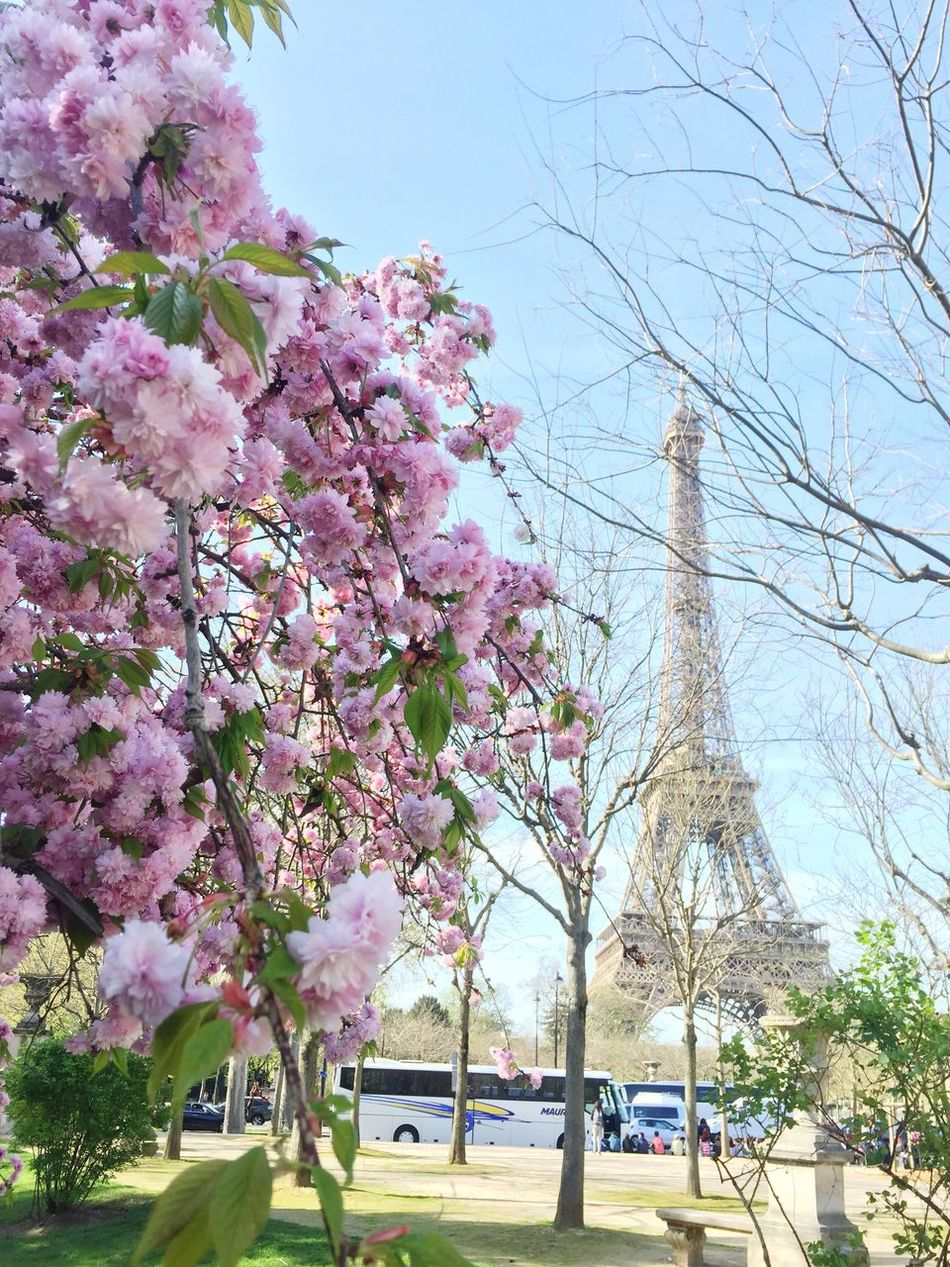 Spring has arrived (finally) 😻🌸😻🌸 Flower Blossom Blossoms  Blooming Flowerporn Travel Destinations Eiffel Tower Eye4photography  Eyem Gallery Naturelovers Paris Sunny