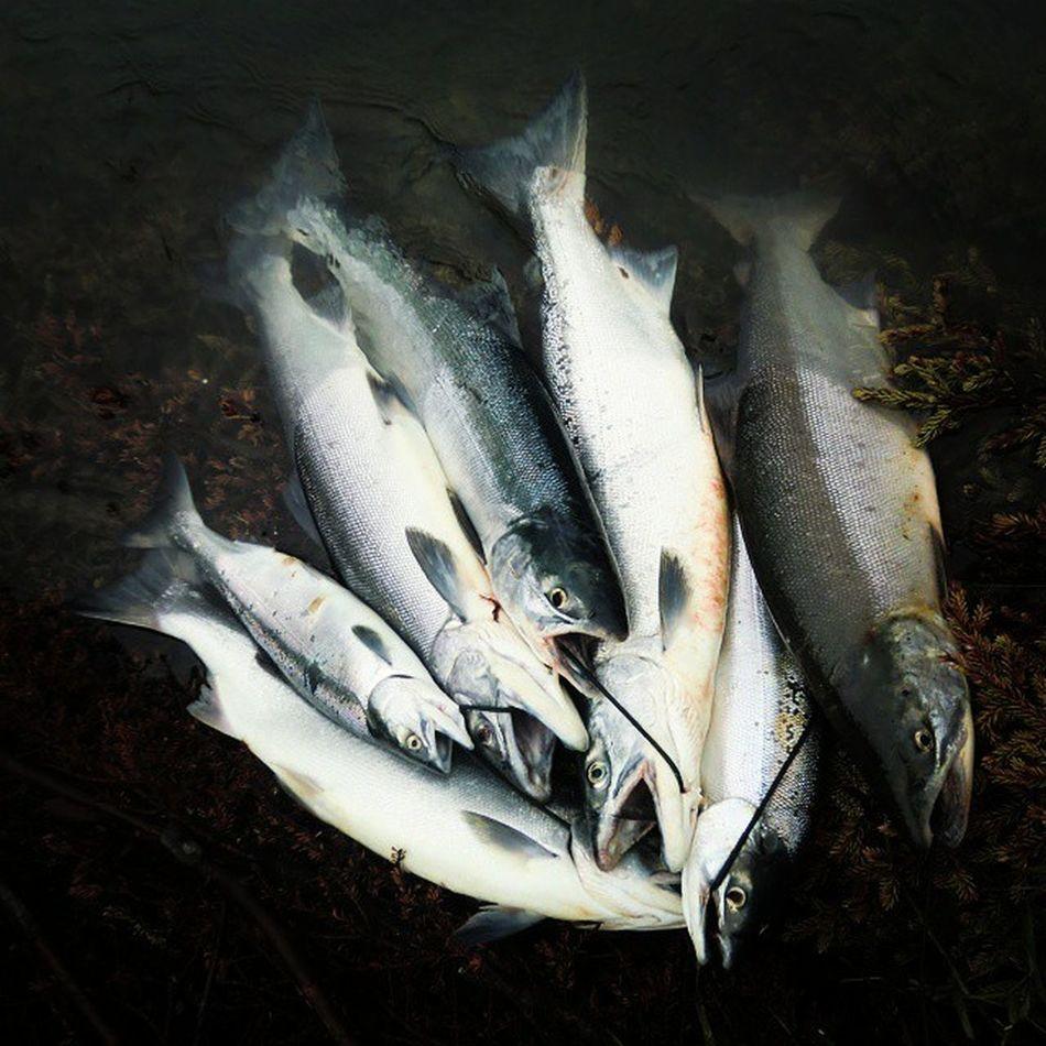 Av og til er det gøy å ta frem bilder fra Eventyrturer . To gutter, 20 minutter, KenaiRiver . Laksefiske ble aldri det samme igjen.