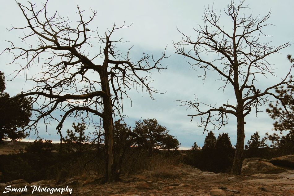 Trees Tree Nature Scenics Outdoors Two Trees Morbid Dark Sinister Gloomy Hike Mood Hiking Exploremore TheGreatOutdoors Greettheoutdoors Nature_collection Cloud - Sky HikeLife Rugged Terrain Nikon Outdoor Photography Solitude Photooftheday Nature
