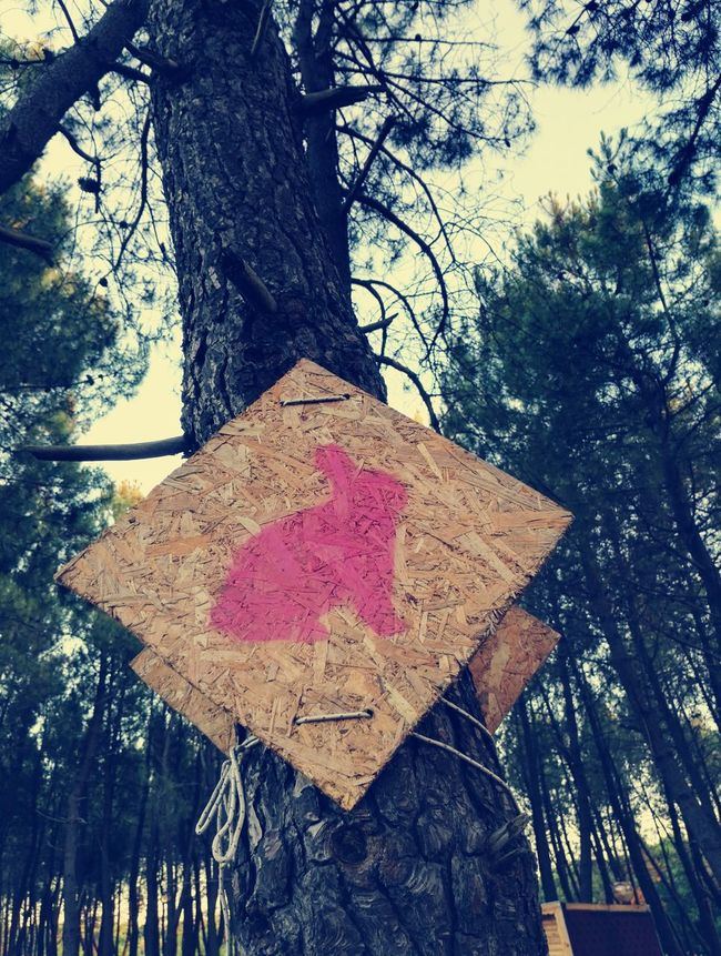Sign Rabbit ❤️ Rabbit 🐇 Tree Trunk Branch Pink Color Sky Outdoors Low Angle View Growth Day