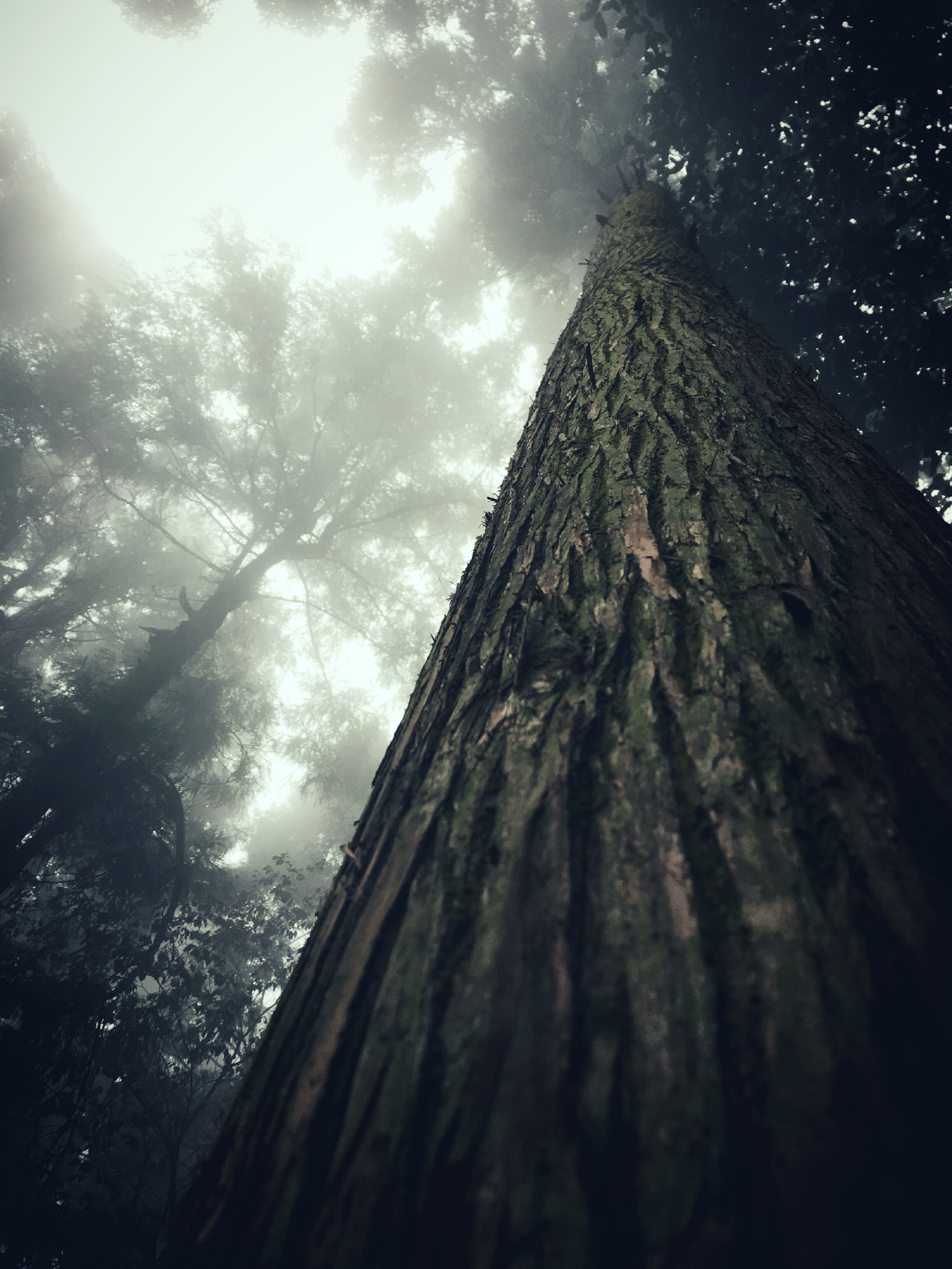 low angle view, architecture, built structure, sky, building exterior, tree, branch, day, outdoors, tall - high, no people, building, cloud - sky, sunlight, growth, directly below, nature, window, cloud, tower
