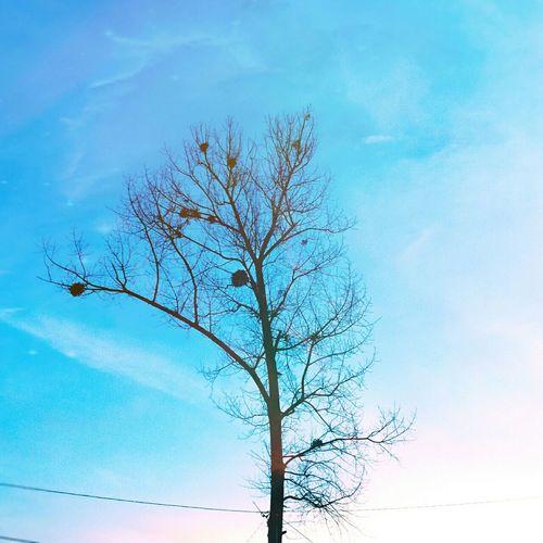 Help Nepal. Pixlr4nepal Hugging A Tree Tree Sky Blue Sky Nature Silhouette Enjoying Life Pray For Nepal