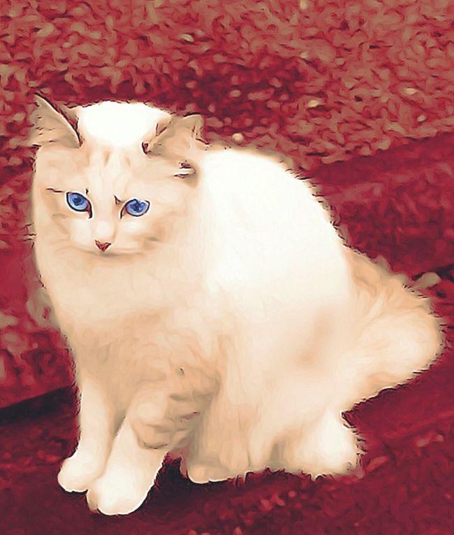 Minette prend la pause😺😽 CHATFIE Catfie Chat Cat Cat♡ Gato Cats Of EyeEm