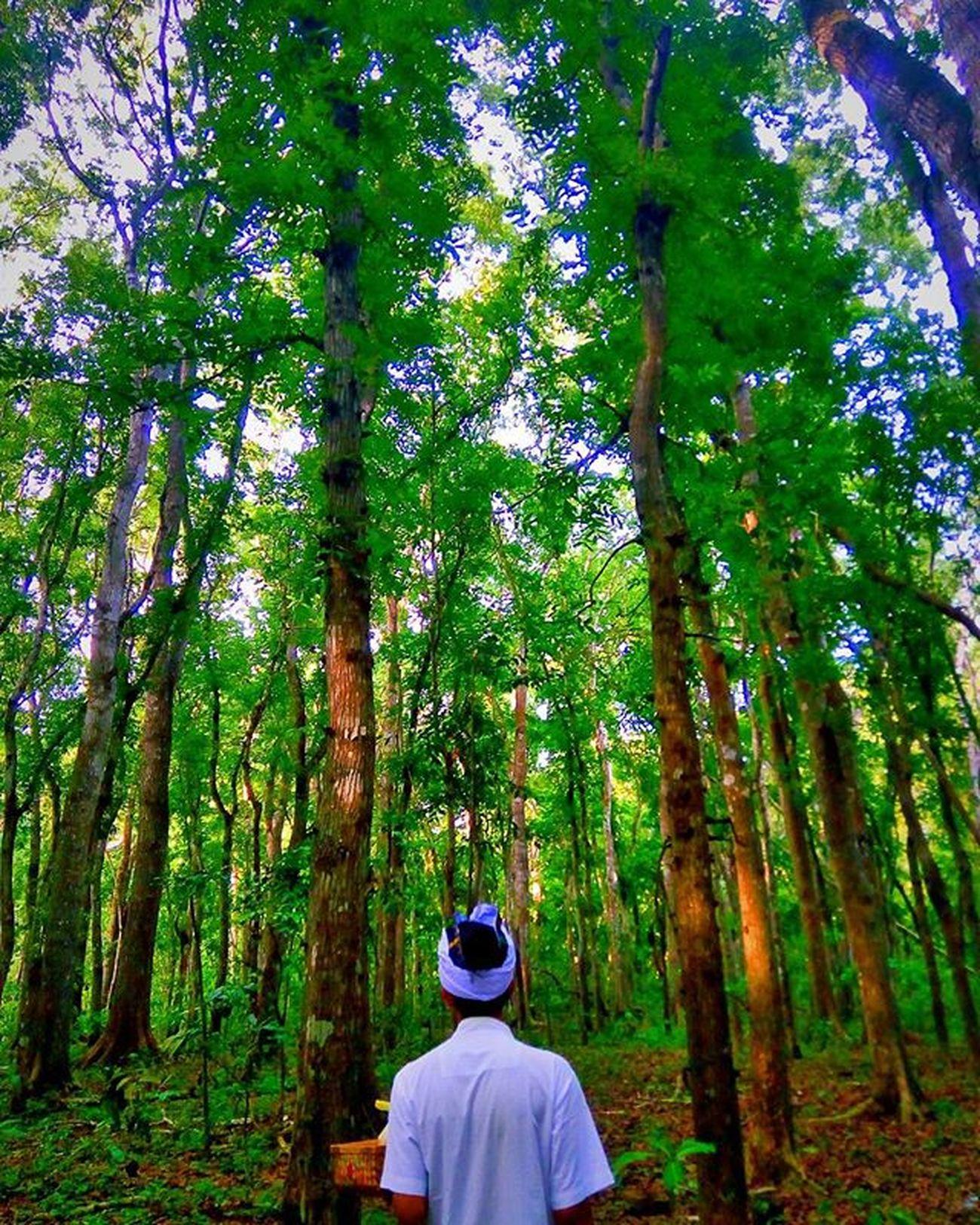 Berjalan di bawah lebatnya alas purwo . . . . . . . . . . . . . Forest Culture Hindu Alaspurwo Nature Exploreindonesia First Eyeem Photo