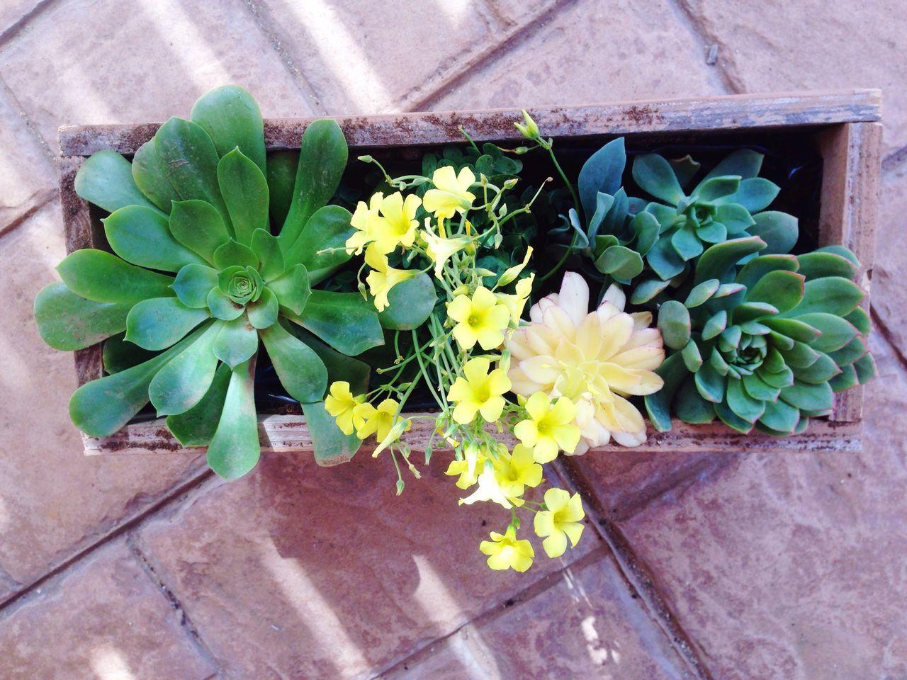 Spring boX!! Flowers,Plants & Garden Flower Collection Flowerporn Flowers Flower Succulents Plant Plants Arrangement