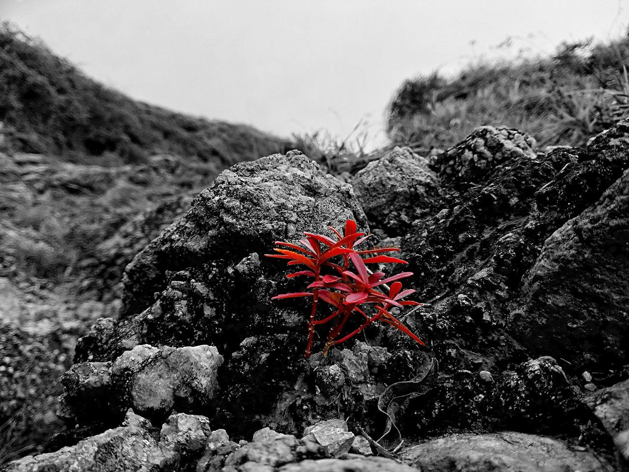 red, nature, rock - object, beauty in nature, day, no people, outdoors, water, close-up
