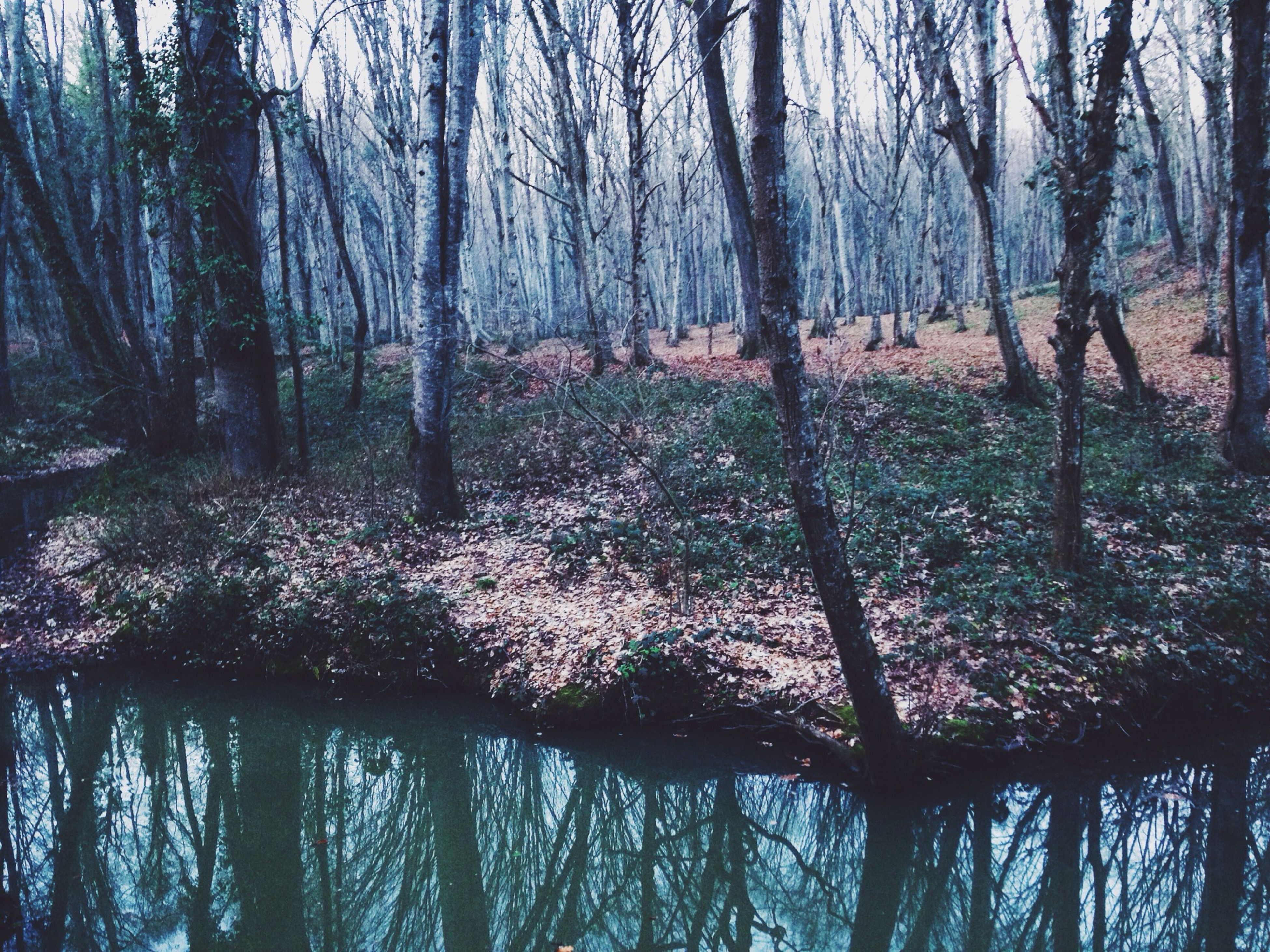 tree, water, tranquility, tranquil scene, reflection, lake, branch, tree trunk, beauty in nature, scenics, nature, forest, growth, bare tree, idyllic, waterfront, woodland, river, non-urban scene, outdoors