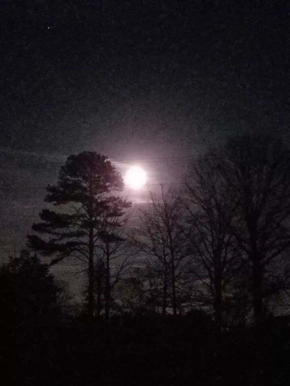 moon, sun, tree, beauty in nature, nature, moonlight, outdoors, scenics, tranquil scene, sky, tranquility, astronomy, low angle view, no people