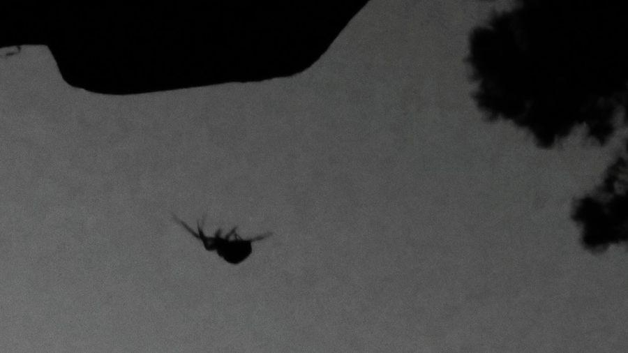 Happy Halloween Real Decoration Spider Halloween Horrors