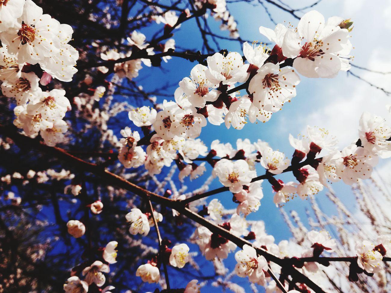 весна прогулка парк природа и красота