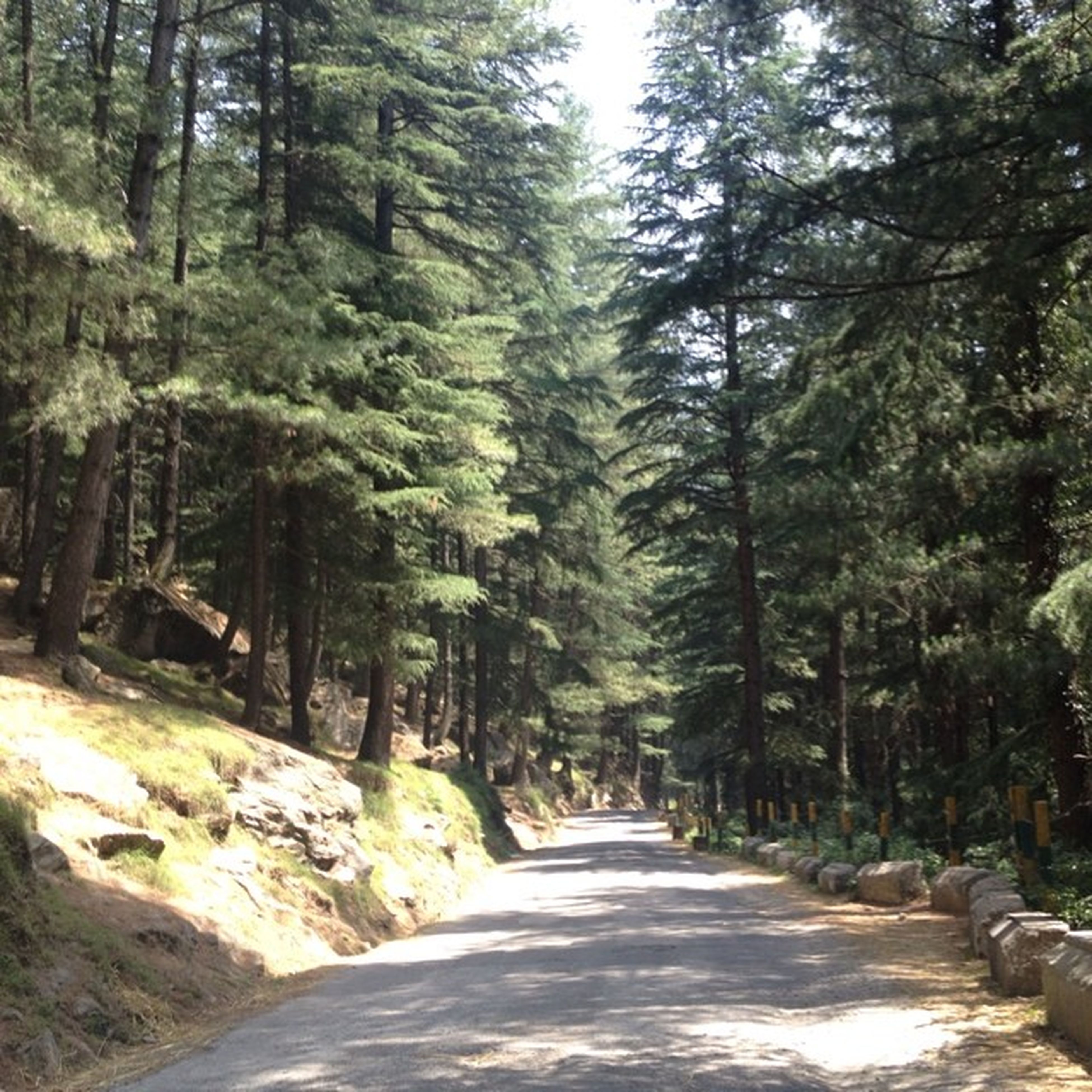 the way forward, tree, diminishing perspective, vanishing point, tranquility, forest, road, tranquil scene, nature, beauty in nature, scenics, narrow, growth, footpath, transportation, long, empty road, empty, day, tree trunk