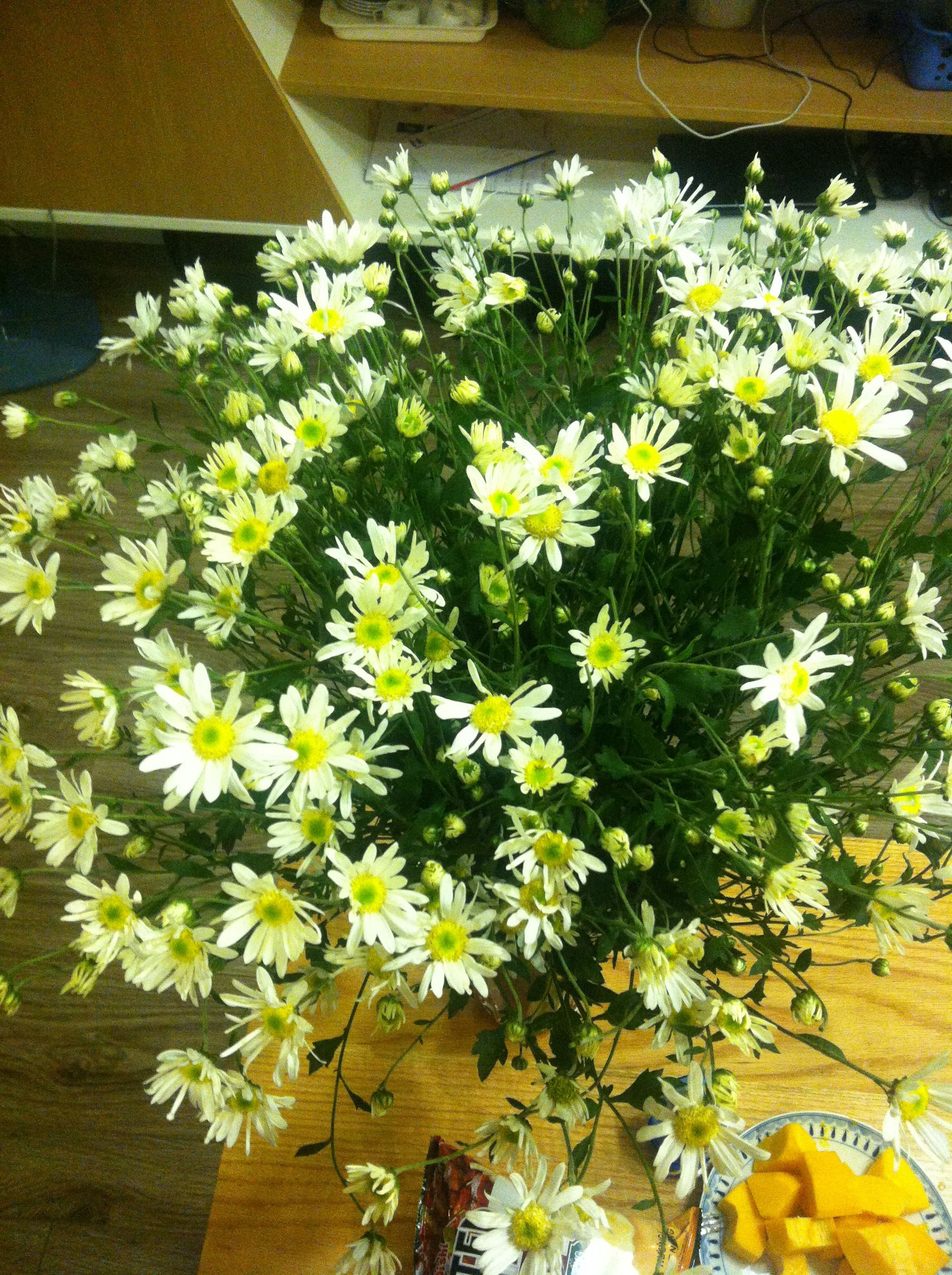 flower, freshness, petal, growth, fragility, white color, plant, high angle view, flower head, yellow, beauty in nature, leaf, nature, wood - material, blooming, daisy, no people, potted plant, day, close-up