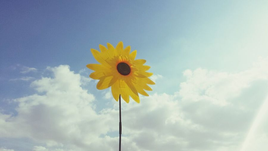 Sunflower ?? by:me?