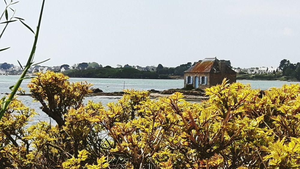 Maison ostréiculture oyster farmer house Water Sea building exterior Sea Side Yellow Flowers tranquility Saint Cado Morbihan (56) Bretagne France
