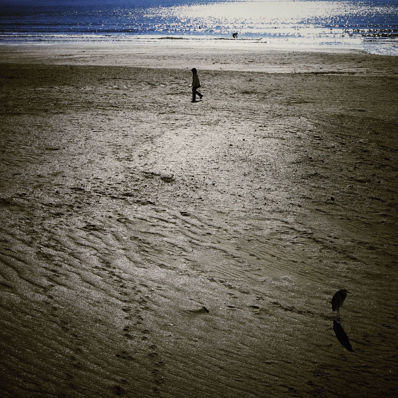 High Angle View Of Person And Bird On Sand
