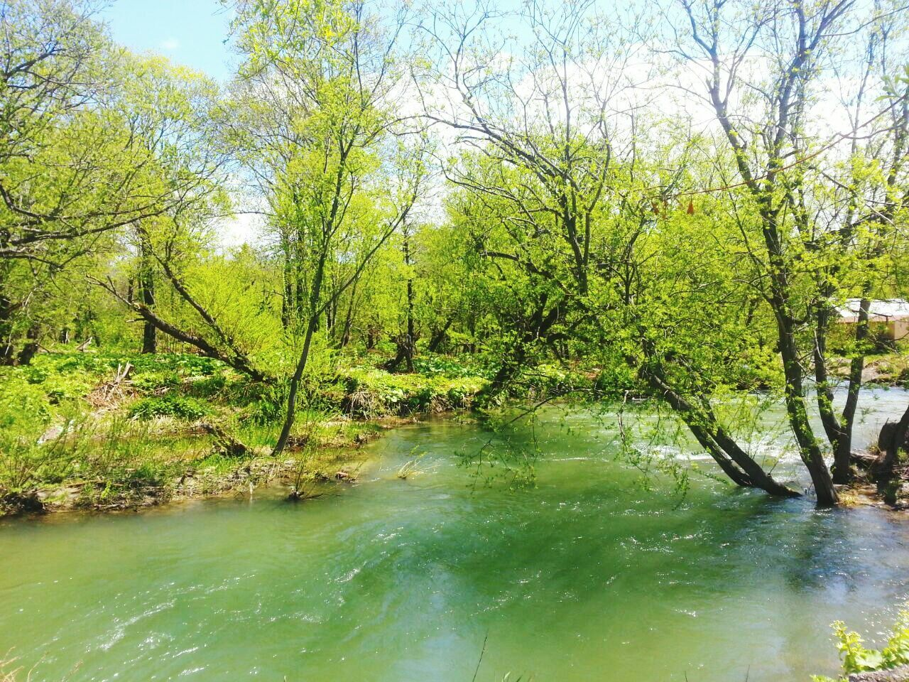 water, nature, tree, river, tranquility, beauty in nature, forest, scenics, no people, tranquil scene, outdoors, landscape, branch, day