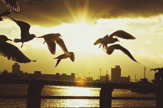 Impossible Moments Silhouette Freedom Aroundtheworldbyluftansa sunset in Nagoya port.