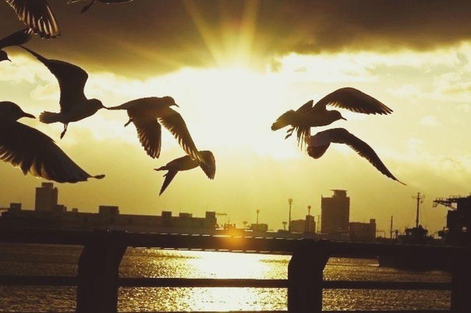 Impossible Moments Silhouette Freedom Aroundtheworldbyluftansa sunset in Nagoya port.