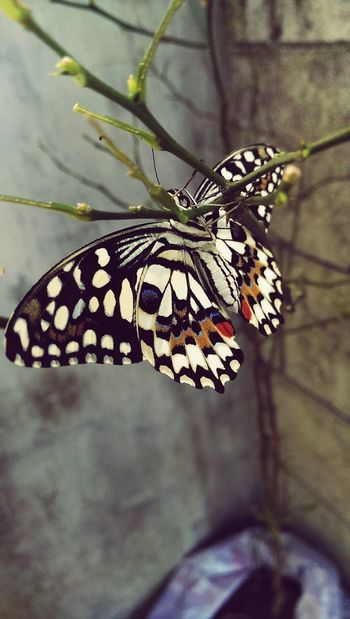 Butterfly Beautiful Beautiful Nature Colorful Nature