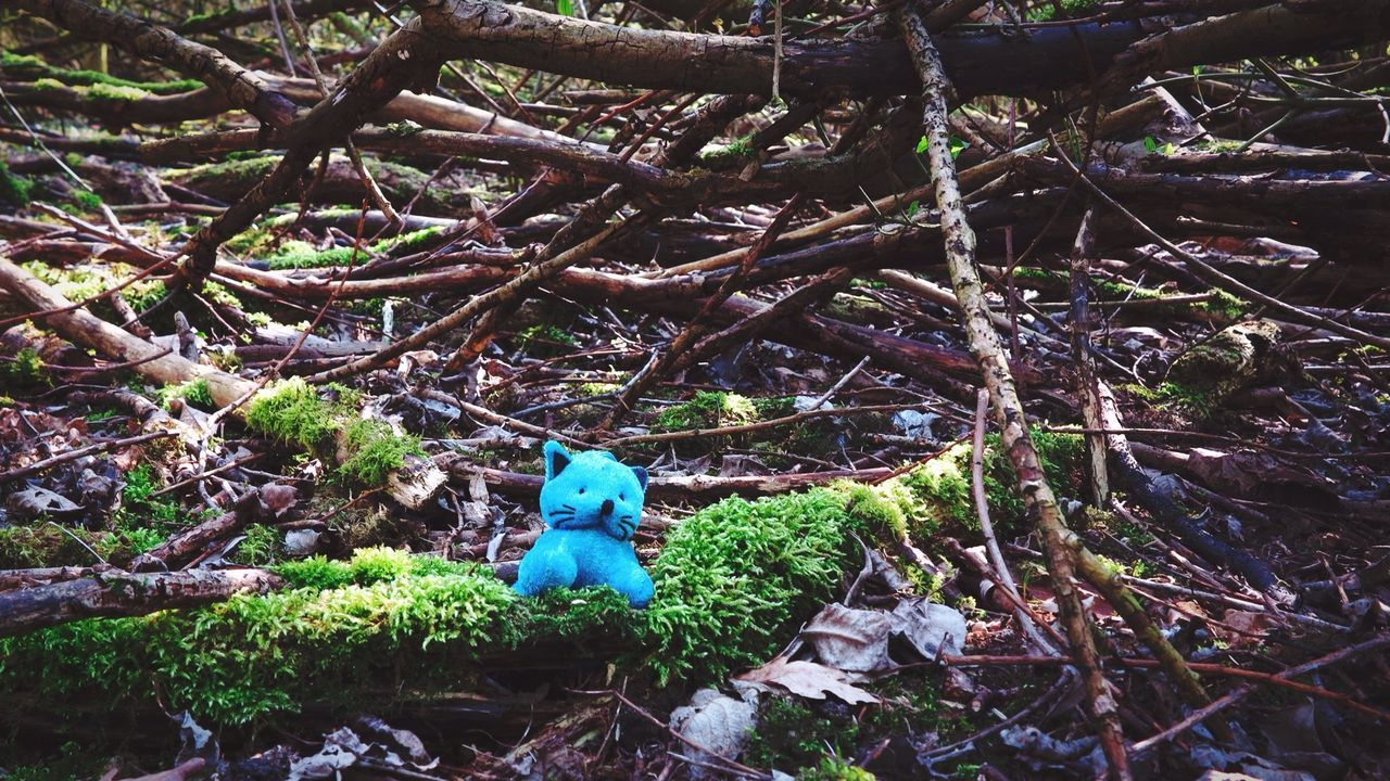 Beautiful stock photos of toys, Abandoned, Blue, Branch, Childhood
