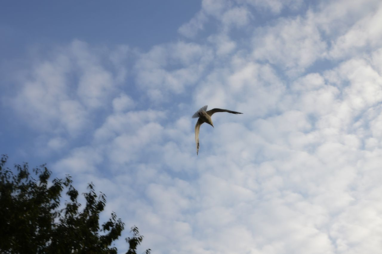 Flying Bird Animals In The Wild Animal Wildlife Outdoors Cloud - Sky No People One Animal Animal Themes Tree Nature Day From My Point Of View Eyeemphoto Eyeem Photography Outdoor Beauty Outdoorsphotoshoot Silence Of Nature