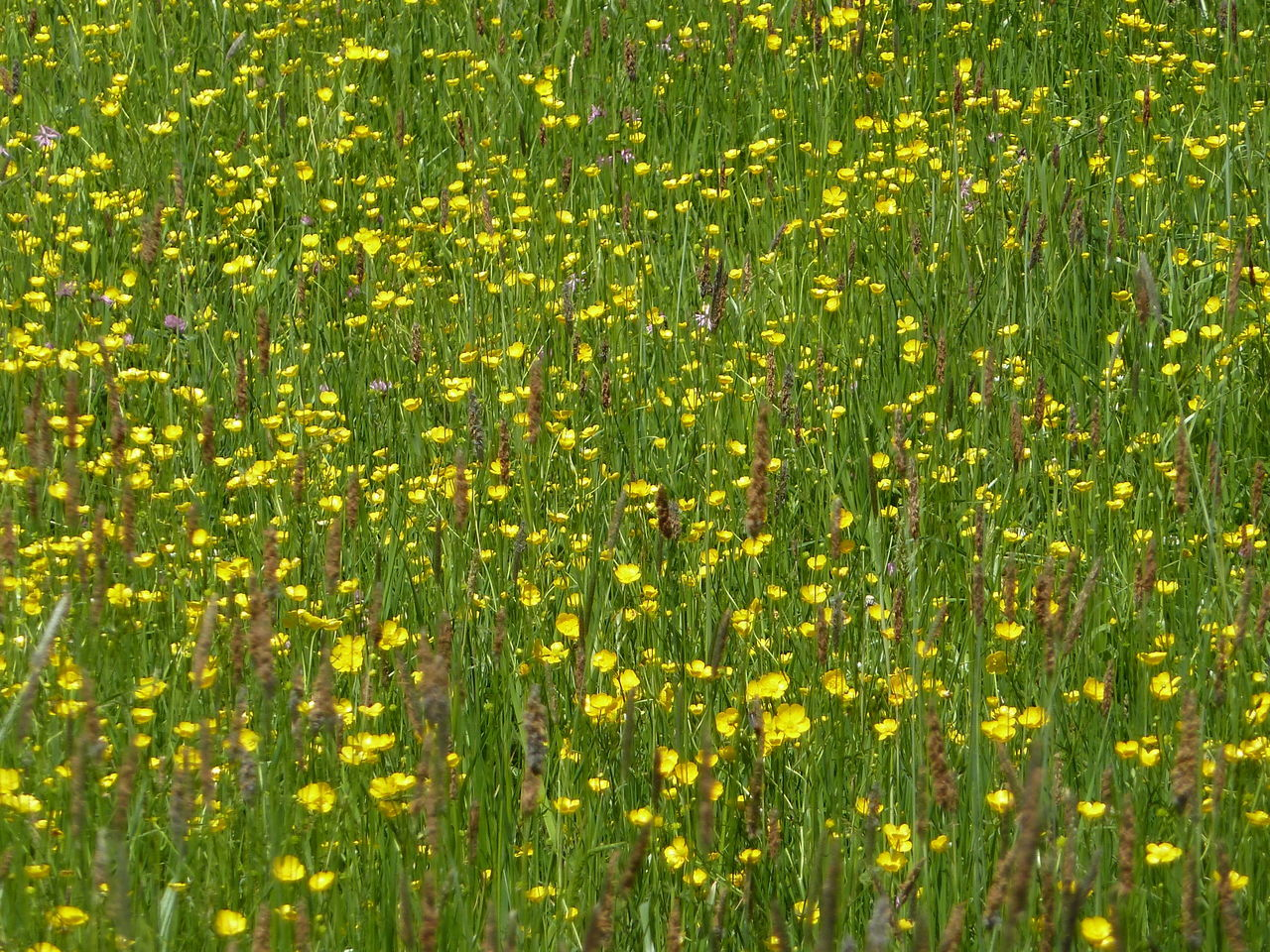 photosynthesis, nature, growth, yellow, plant, environment, full frame, backgrounds, green color, summer, flower, field, outdoors, day, freshness, beauty in nature, no people, grass, close-up